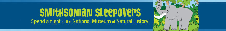 Spend a night at the National Museum of Natural History