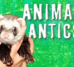 Animal-Antics