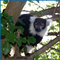 living-animals-of-the-rainforest