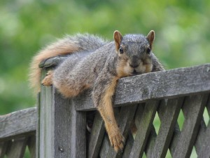 lazy-squirrel-kids-ms_46832_600x450