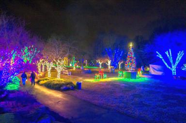 Meadowlark_Lights_2012-2B