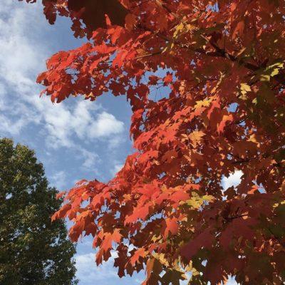Weekend Picks: October 20-22, 2017