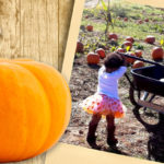 Fall Festivals and Orchards in and around Washington, DC