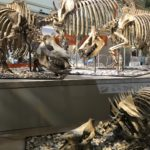 David H. Koch Hall of Fossils - Deep Time opens at Smithsonian National Museum of Natural History